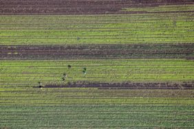 Aerial view of seven workers in the salad field - Klaus Leidorf Aerial Photography