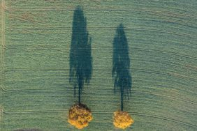 Aerial view of two autumnally coloured oaks on a green field - Klaus Leidorf Aerial Photography