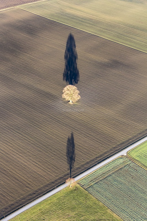 Aerial view of two trees casting a long shadow on the field - Klaus Leidorf Aerial Photography