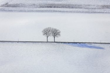 Aerial view of two birches by the wayside - Klaus Leidorf Aerial Photography