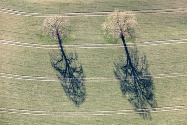 Aerial view of two oak trees in the field - Klaus Leidorf Aerial Photography