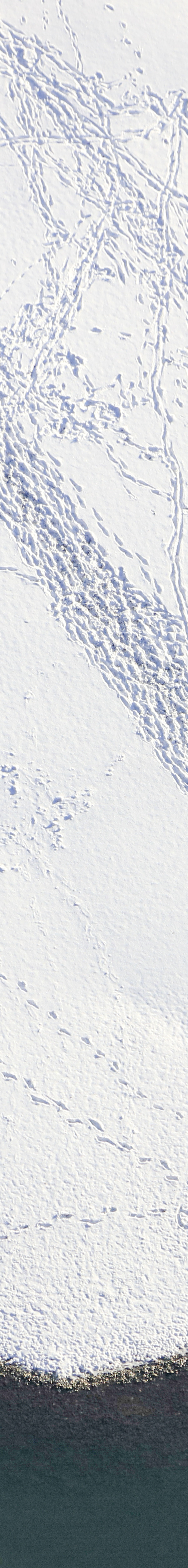 Aerial view of two walkers in the snow on the Danube bank near Weltenburg - Klaus Leidorf Aerial Photography