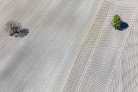 Aerial view of two lonely trees in arable land - Klaus Leidorf Aerial Photography