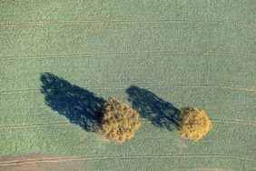 Aerial view of two autumnally coloured oak trees in the field - Klaus Leidorf Aerial Photography