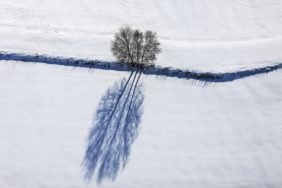 Aerial view of a triple tree with strong shadow on a snowy field near Heinzelwinkl - Klaus Leidorf Aerial Photography