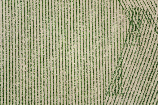 Aerial view of a cornfield with very young plants in a bizarre pattern - Klaus Leidorf Aerial Photography