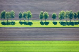 Aerial view of a row of birch trees on the edge of a field - Klaus Leidorf Aerial Photography