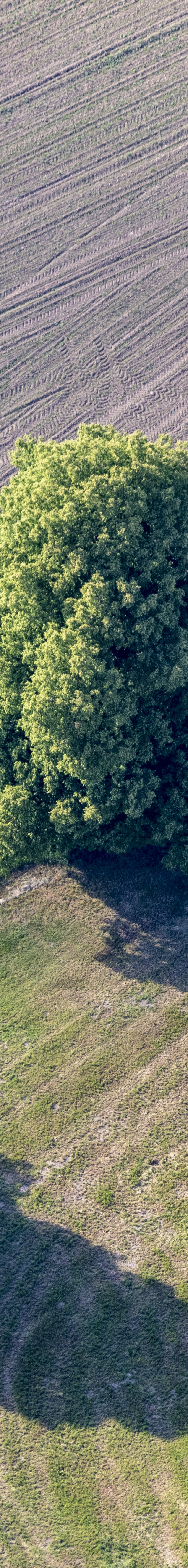 Aerial view of three broadleaf trees at the field edge - Klaus Leidorf Aerial Photography