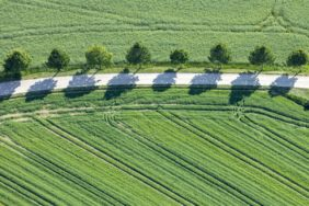 Aerial view of eight broadleaf trees at the wayside - Klaus Leidorf Aerial Photography
