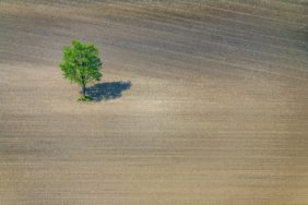 Aerial view of a lonely tree on the field - Klaus Leidorf Aerial Photography