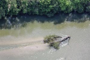 Aerial view of a leaf tree drifting in the Isar river near Oberfoehring, Munich - Klaus Leidorf Aerial Photography
