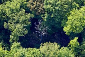 Aerial view of a dead tree in a broadleaf forest - Aerial view of a dead tree in a broadleaf forest - Klaus Leidorf Aerial Photography