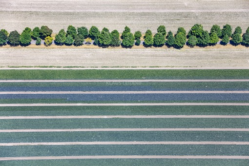 Aerial view of an alley above the strips of  cabbage fields - Klaus Leidorf Aerial Photography