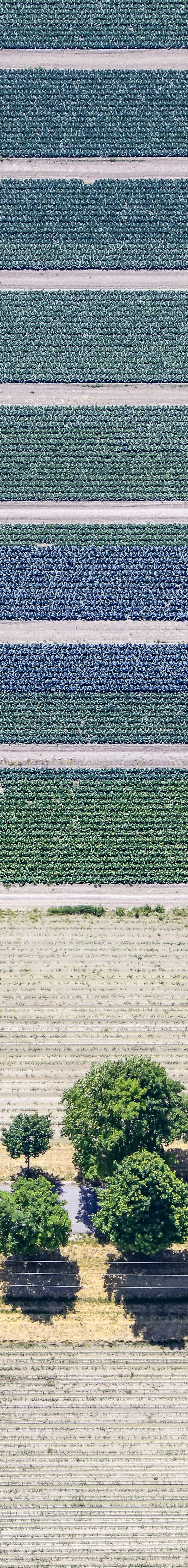 Aerial view of an alley below the strips of cabbage fields - Klaus Leidorf Aerial Photography