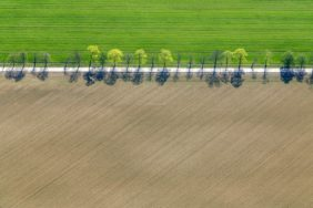 Aerial view of a fresh green line of trees at the Streiflacher Weg in Munich-Freiham - Klaus Leidorf Aerial Photography