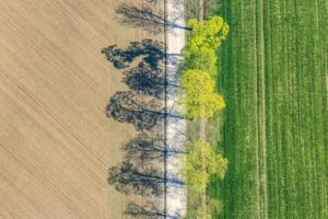 Aerial view of a fresh green line of trees at the Streiflacher Weg in Munich-Freiham, vertical - Klaus Leidorf Aerial Photography