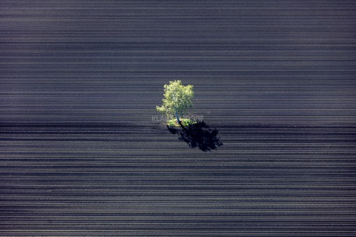 Aerial view of a lush green birch tree on a black field - Klaus Leidorf Aerial Photography