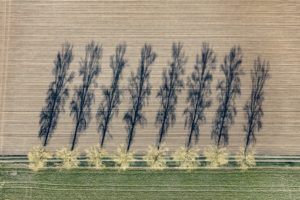Aerial view of a row of trees next to a farm road casting long shadows - Klaus Leidorf Aerial Photography