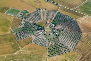Aerial view of a special formation of olive groves near Ordona in Apulia, Italy - Klaus Leidorf Aerial Photography