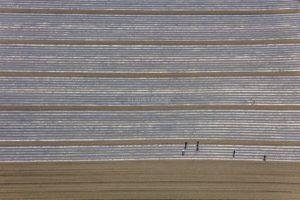 Aerial view of six agricultural workers busy planting on a vegatable field with foil strips - Klaus Leidorf Aerial Photography