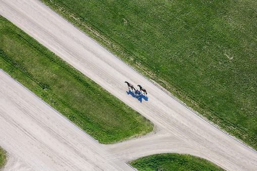 Aerial view of the trotting course in Munich-Daglfing with ongoing training - Aerial view of the trotting course in Munich-Daglfing with ongoing training - Klaus Leidorf Aerial Photography