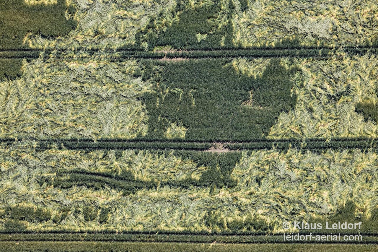Aerial view of the traces of heavy rains in a grain field